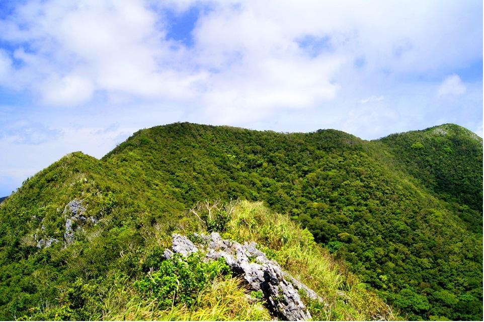 山イメージカラー